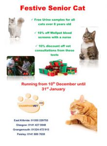 Festive senior cat offer